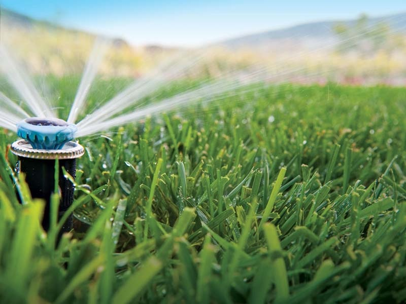 How Much And How Often Should You Water Your Lawn?