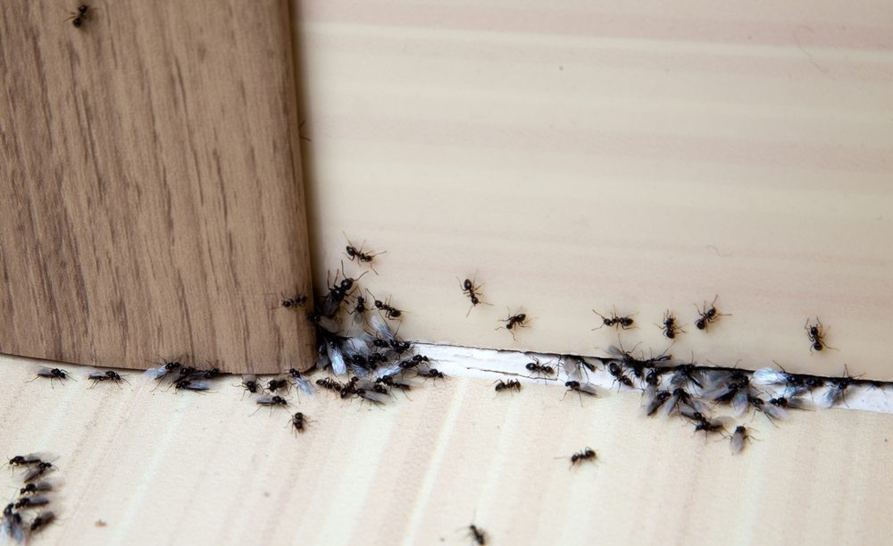 The Points of the Most Efficient Pest Control Company