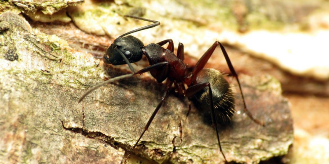 How to Exterminate Ants from Your Home