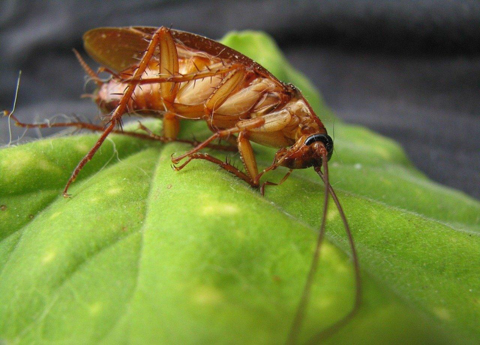 These 5 Common Pitfalls Might Be Causing Your Home Prone To Pest